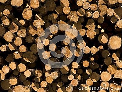 Cut Pine Lumber