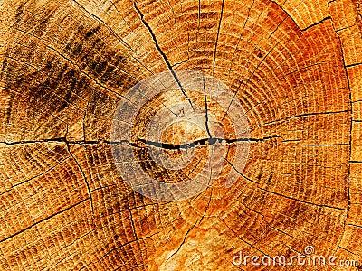 Cut a tree an oak