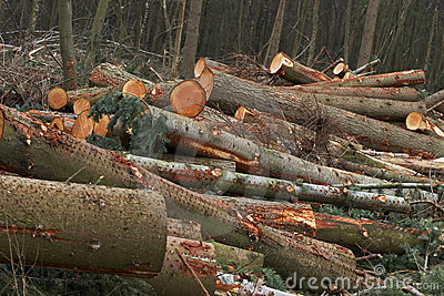 Cut trees down