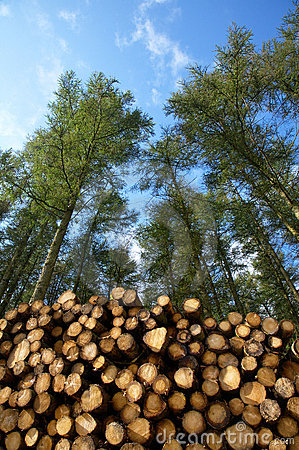 Free Cut Trees In A Forest. Stock Image - 6426881