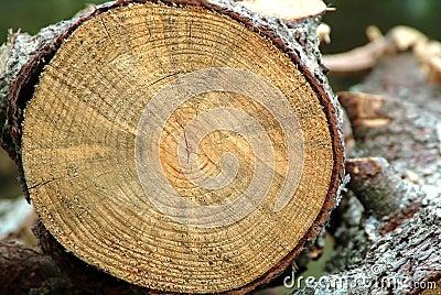 Cut trunk details