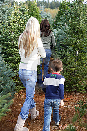 Cut your own christmas tree lot