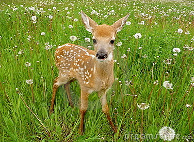 Cute baby deer Stock Photo