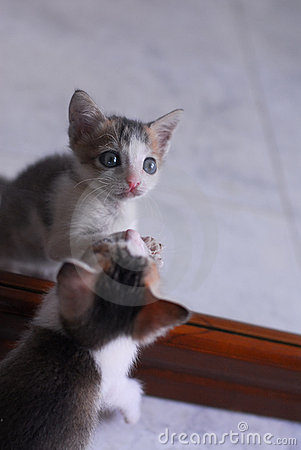 Cute baby kitten playing with mirror