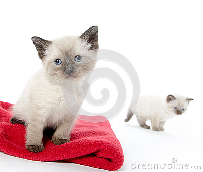Cute baby kitten on red blanket