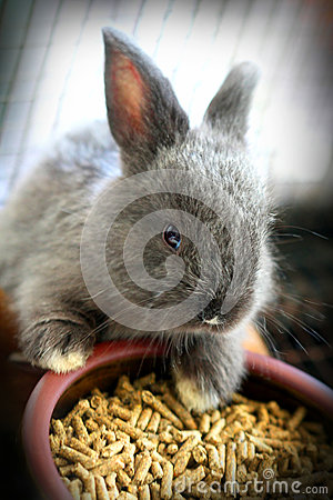 Free Cute Baby Rabbit Stock Images - 27690004
