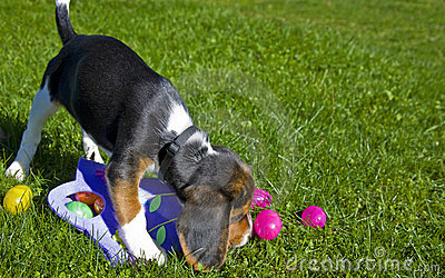 Cute Beagle Puppy with Easter Eggs