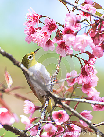 Free Cute Bird Sitting On Blossom Tree Branch Stock Images - 33772134
