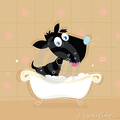 Cute Black dog bath