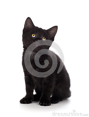 Free Cute Black Kitten  On A White Background Stock Photo - 44788330