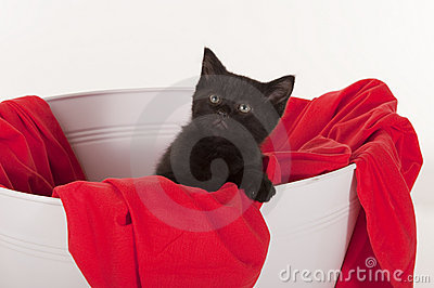 Cute black kitten in white tub with red blanket