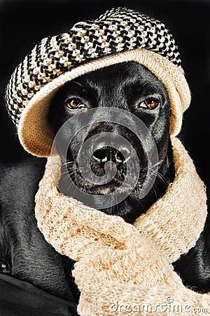 Cute black mutt