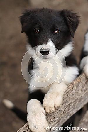 Cute Black And White P...