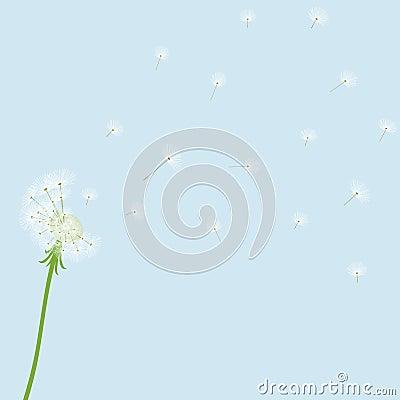 Cute  blow dandelion