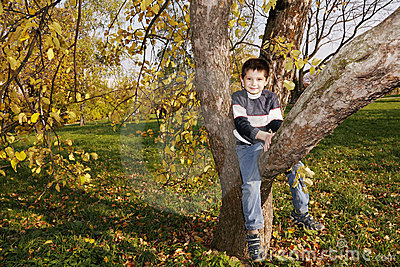 Cute boy on autumn tree