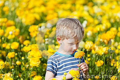 Cute boy at the flower field