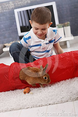 Cute boy playing with pet bunny