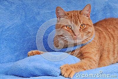 Cute brown cat on sofa