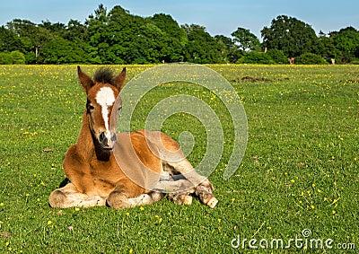 Cute Brown Foal