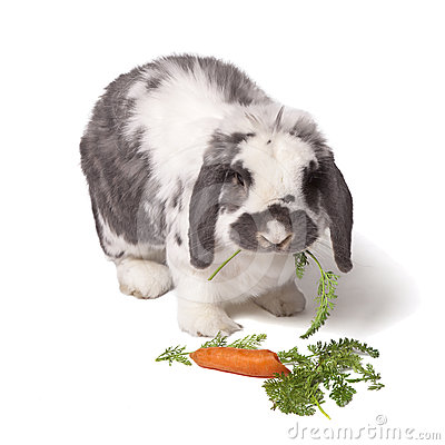 Cute Bunny Rabbit Eating Carrot and Greens