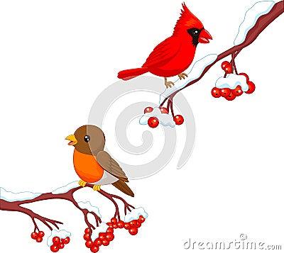 Free Cute Cartoon Robin Bird And Cardinal Bird On The Berry Tree Stock Photography - 61836582