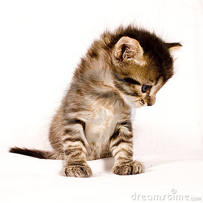 Free Cute Cat Stock Photo - 2507130