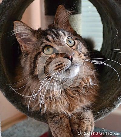 Free Cute Cat Stock Photos - 78323873