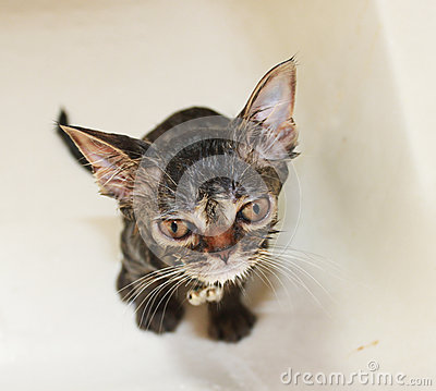 Cute cat in bathroom
