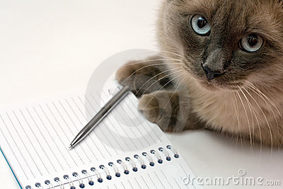 Cute cat and blank open notebook