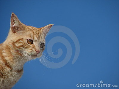 Cute cat and blue sky