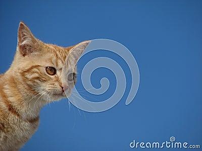 Cute cat and blue sky