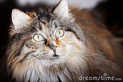 Cute cat close-up