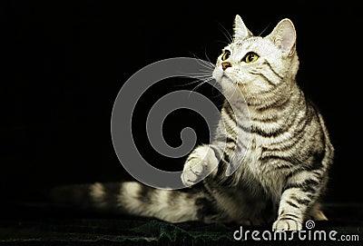 Cute cat in the dark