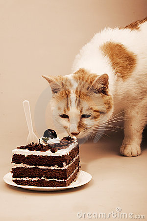 Cute cat and delicious cake