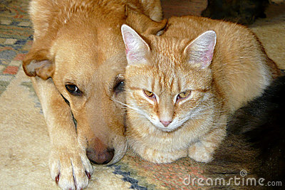 Cute cat and dog