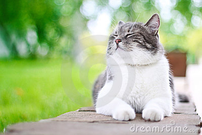 Cute cat enjoying his life
