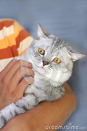 Cute cat in the hand