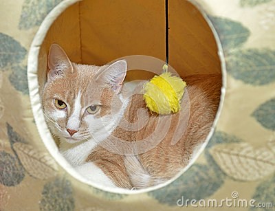 Cute cat hiding in a fabric  house