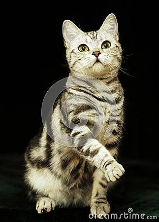 Free Cute Cat In The Dark Royalty Free Stock Image - 18920406