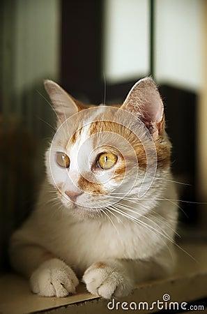 Cute cat indoor