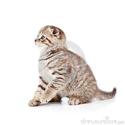 Cute cat kitty on white