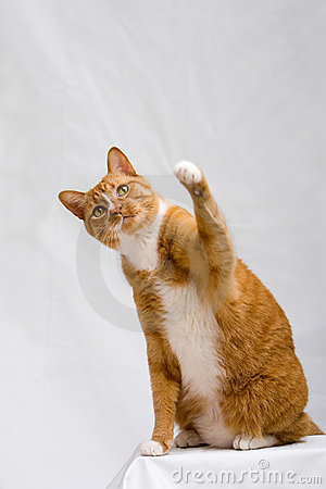 Cute cat with paw up