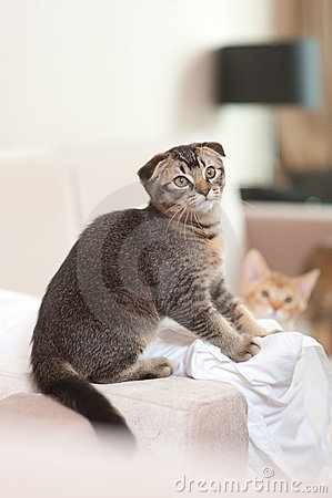 Cute cat playing
