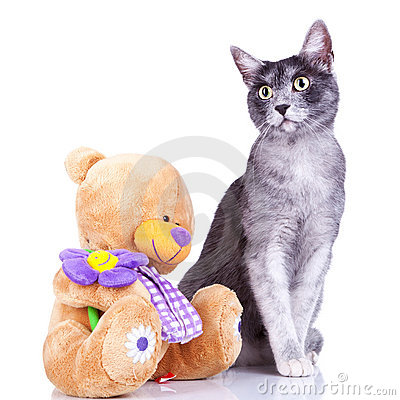 Cute cat posing near a teddy toy