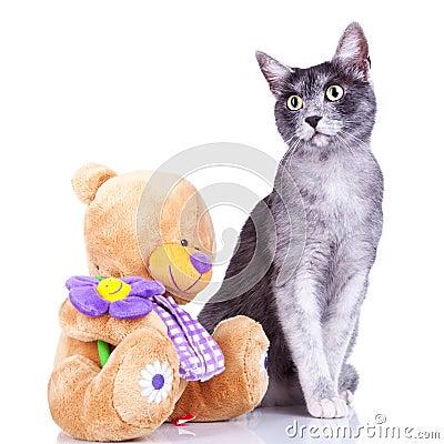 Cute cat posing near a teddy toy
