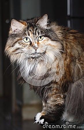 Cute cat s portrait