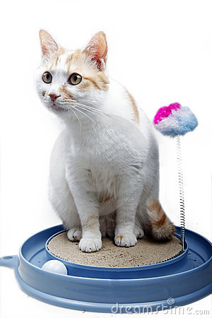 Cute cat with toy