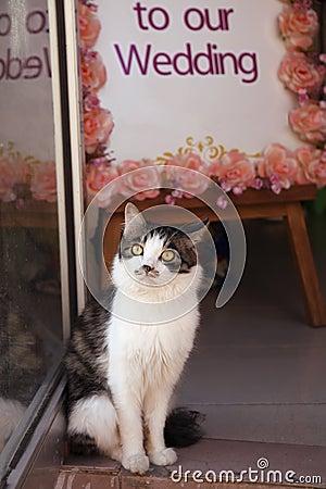 Cute cat in wedding shop
