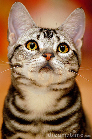 Free Cute Cat With Curious Look Stock Image - 18920481
