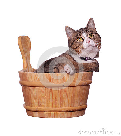Cute cat in wooden bowl